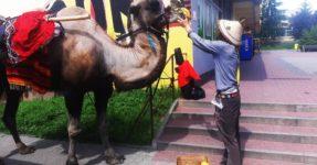 Podróżnik z wielbłądem